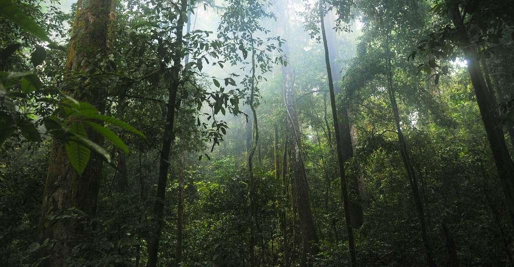Forêt tropicale. © Stokpic, Pixabay, DP