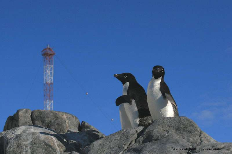 Station antarctique côtière de Dumont d'Urville