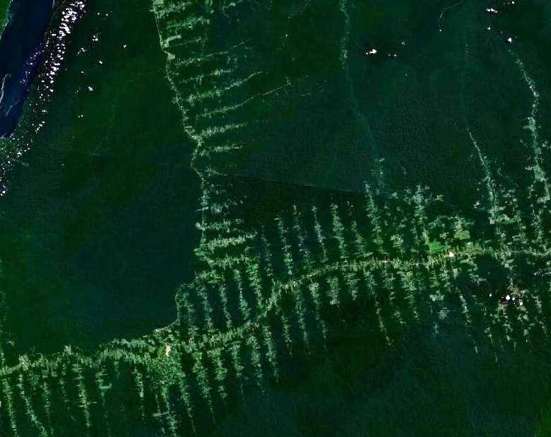 La déforestation, visible sur cette vue aérienne, est l'une des causes de la chute des populations d'orangs-outangs. On estime à moins de 50.000 le nombre d'individus qui survivent à l'état sauvage. © Nasa, Wikimedia Commons, domaine public