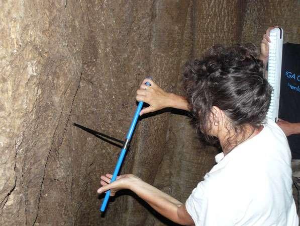 À Samba Dia, le baobab possède une large cavité qui permet d'échantillonner directement depuis l'intérieur de l'arbre. © Sébastien Garnaud
