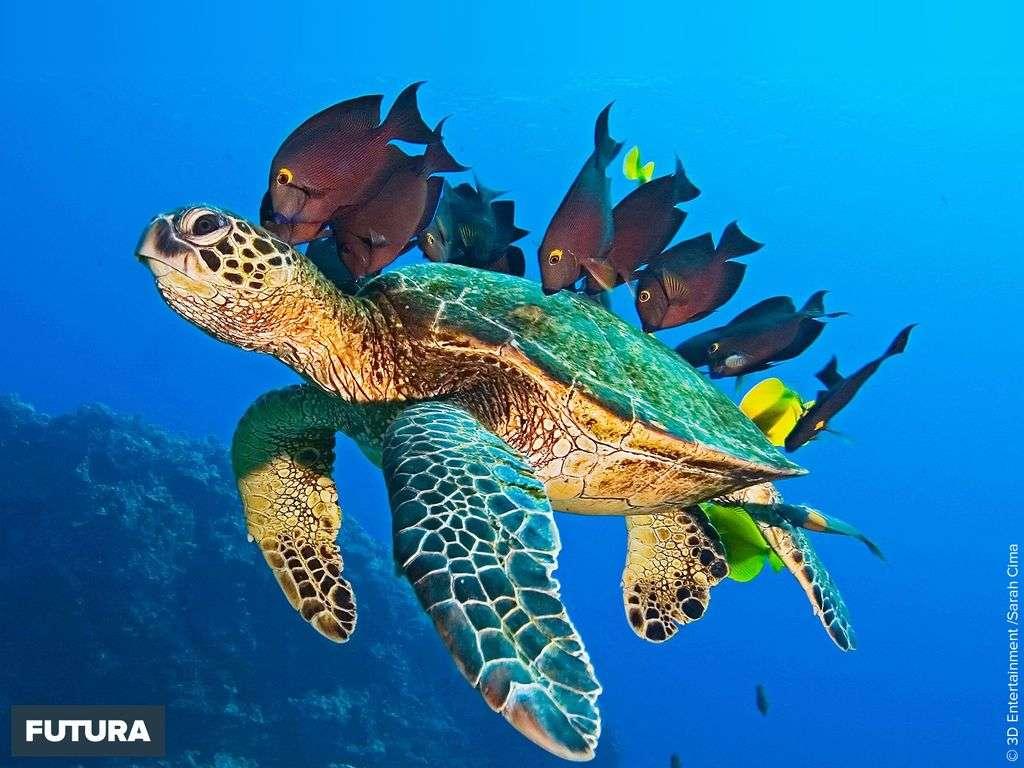 Voyage à dos de tortue de mer
