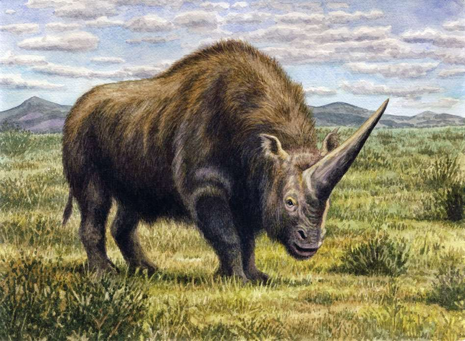 La licorne sibérienne a survécu jusqu'à 35.000 ans avant notre époque : elle a donc cohabité avec l'Homme. © WillemSvdMerwe, deviantart