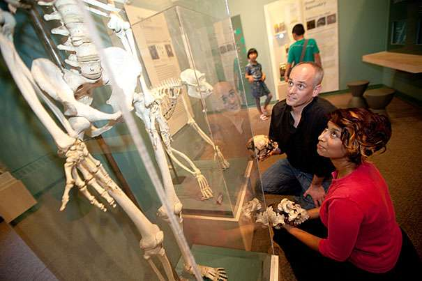 Zarin Machanda (à droite) et Chris Organ, deux des auteurs de l'étude, dans la galerie de l'évolution du Musée d'histoire naturelle de l'université de Harvard. © Kris Snibbe/Harvard Staff Photographer