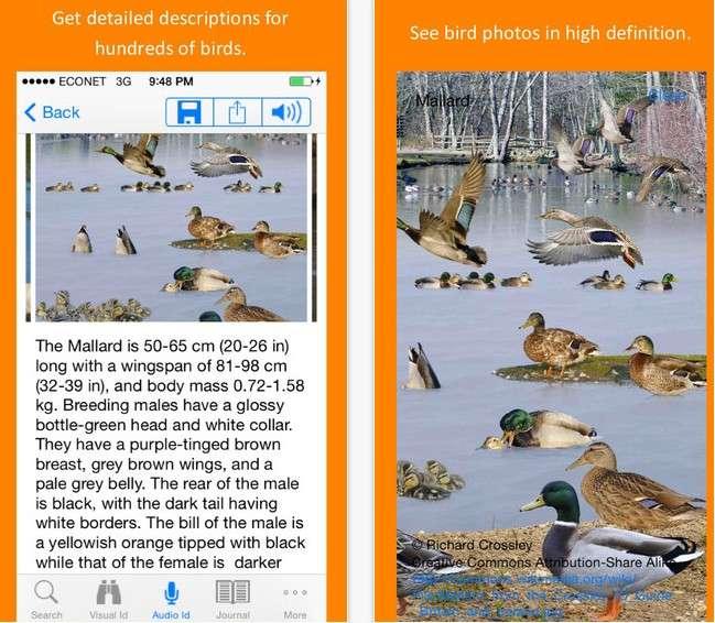 Twigle s'appuie sur une base de données contenant près d'un millier d'espèces d'oiseaux. Chaque oiseau est décrit dans une fiche détaillée qu'il est possible de sauvegarder sur son mobile Android ou iOS. © Avelgood Apps