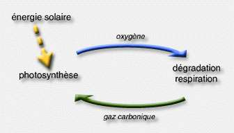 Cycle O2 - CO2.