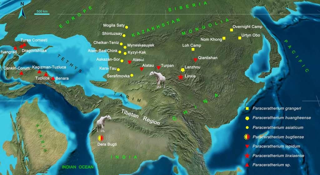 Répartition et migration des différentes espèces de Paraceratherium à l'Oligocène. Les espèces précoces sont marquées en jaune, et le rouge indique les espèces de l'Oligocène tardif. © Tao Deng