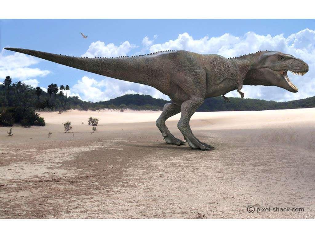 Le giganotosaure, ou Giganotosaurus, l'un des plus grands carnivores terrestres