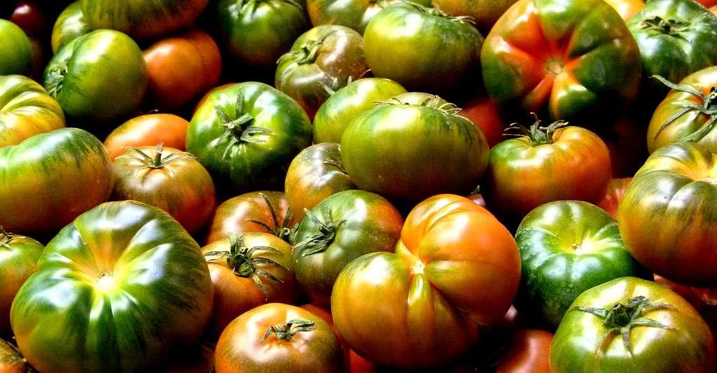 Où en est la recherche sur les tomates OGM ? © Antonio Marín Segovia, CC by-nc 2.0