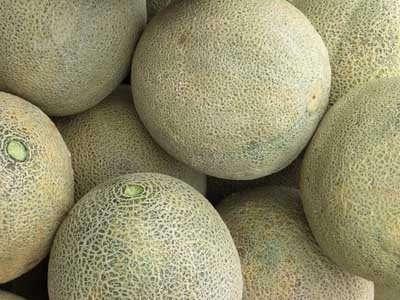 Nec a choisi le melon car ses motifs sont très visibles et l'aspect du fruit ne bouge pas pendant le transport. © DR