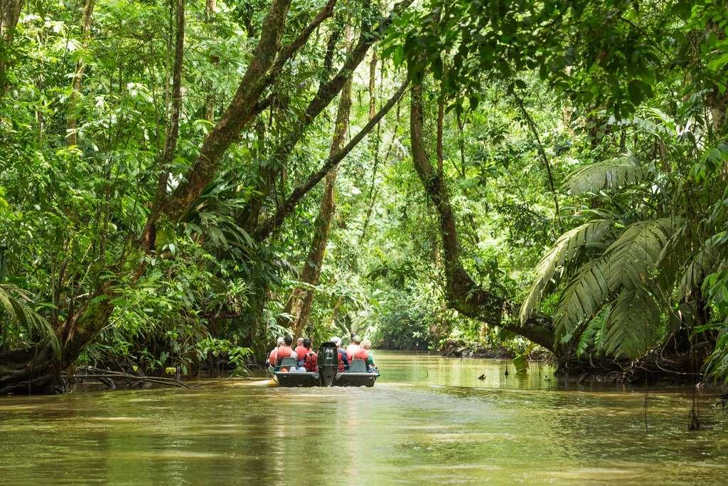 Le Costa Rica se différencie par un cadre politique et une législation forestière claire, réglementée, mais flexible. © roca83, Adobe Stock