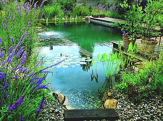 La piscine naturelle : un milieu changeant, vivant, à l'opposé de la stérilité des bassins chlorés. © Biotop