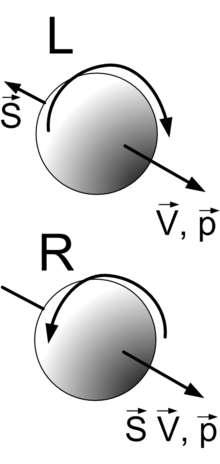La notion d'hélicité pour les particules élémentaires comme les quarks et les leptons est illustrée par ce schéma. V et p sont respectivement les vecteurs vitesse et quantité de mouvement de ces particules, que l'on peut se représenter comme des toupies en rotation. Le vecteur de moment cinétique propre S représente leur spin. Selon que celui-ci est parallèle ou antiparallèle aux vecteurs V et p, la particule, par exemple un neutrino, est dite droite (R pour right en anglais) ou gauche (L pour left en anglais). © haade, cc by sa 3.0