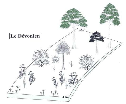 Fig. 2 : Evolution des plantes terrestres au cours du Dévonien.