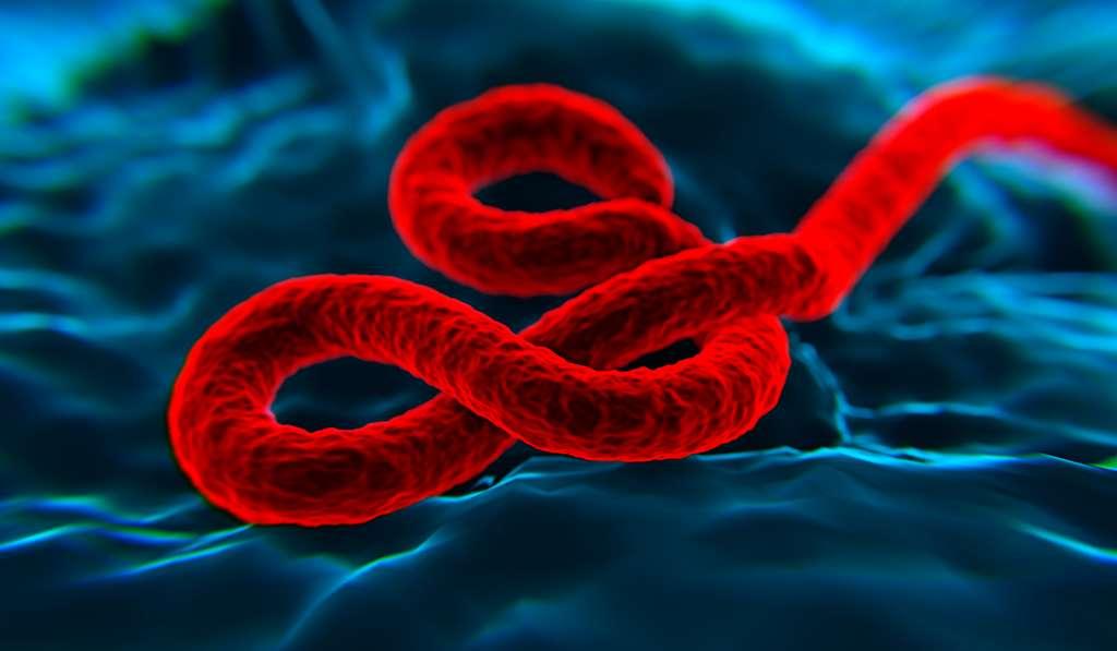 Le virus Ebola est un filovirus qui comprend plusieurs espèces différentes : Bundibugyo, Zaïre, Reston, Soudan et Forêt de Taï. © nanomanpro, Fotolia