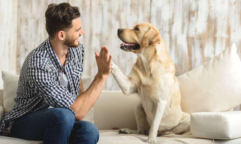 Proposez-lui suffisamment d'occupation, offrez-lui assez d'attention et un chien vivra aussi heureux dans un appartement que dans une maison avec jardin. © YakobchukOlena, Fotolia