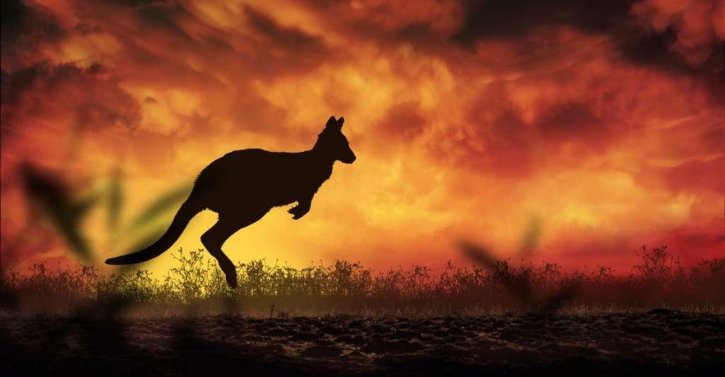 Les incendies qui ravagent l'Australie depuis le mois de septembre ont déjà fait 28 morts et détruit plus de 10 millions d'hectares de forêt et 2.000 maisons. Les experts les voient comme une conséquence des phénomènes météorologiques extrêmes tant redoutés par le Global Risks Report 2020. © ginettigino, Adobe Stock