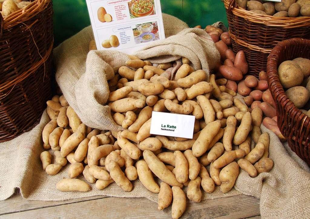 Pommes de terre Ratte. © Claus Ableiter, CC by-nc 3.0