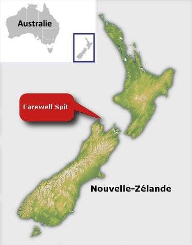 Les globicéphales ont été retrouvés sur une plage de Farewell Spit, au nord de l'île du Sud, en Nouvelle-Zélande. © Futura-Sciences