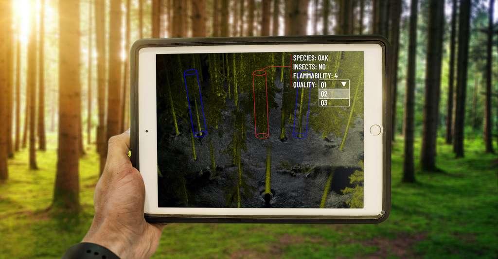 Pour développer son logiciel, Outsight travaille depuis deux ans en collaboration avec des scientifiques spécialistes de la forêt. © Outsight