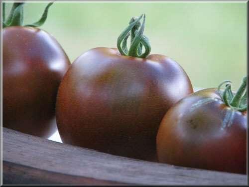La saveur de la tomate noire de Crimée est particulièrement douce et sucrée. © Tomodori