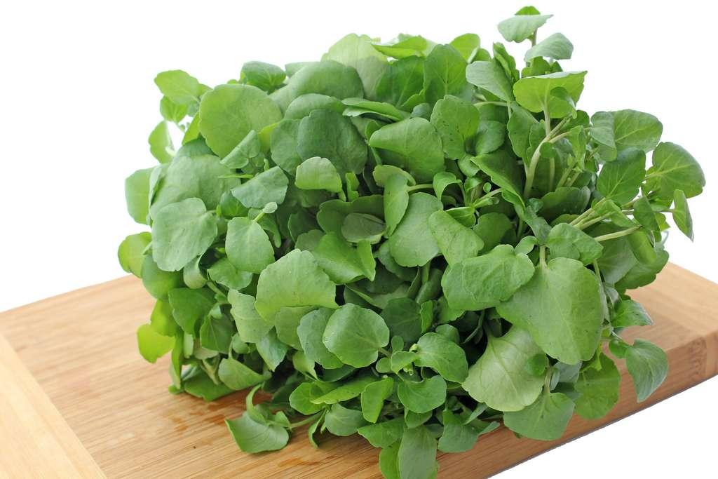 Avec le pot de terre Terraplanter, il est par exemple possible de faire pousser du cresson. © helendevun, Adobe Stock
