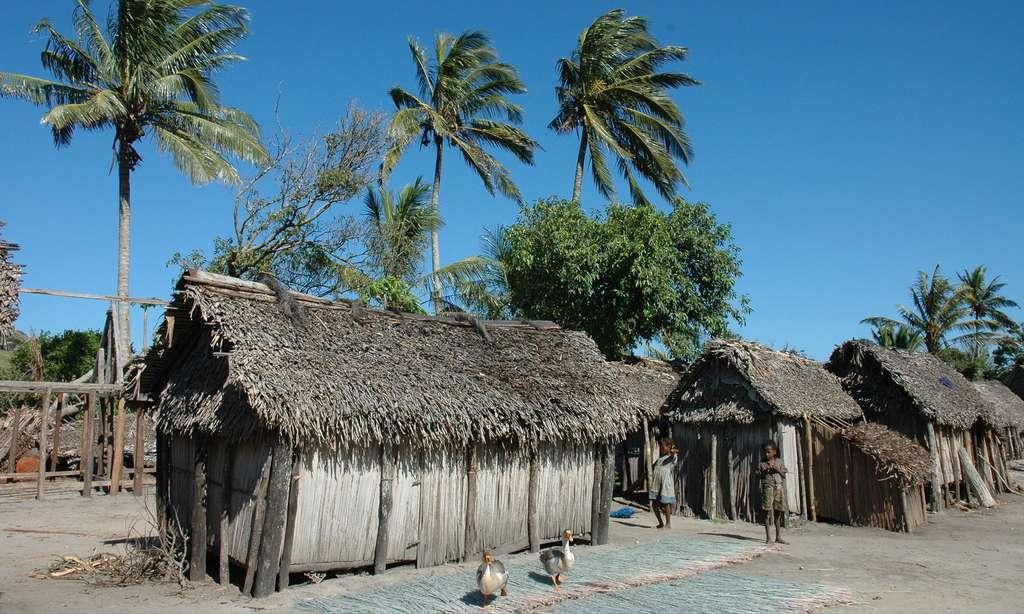 Cases dans le massif de Lokaro