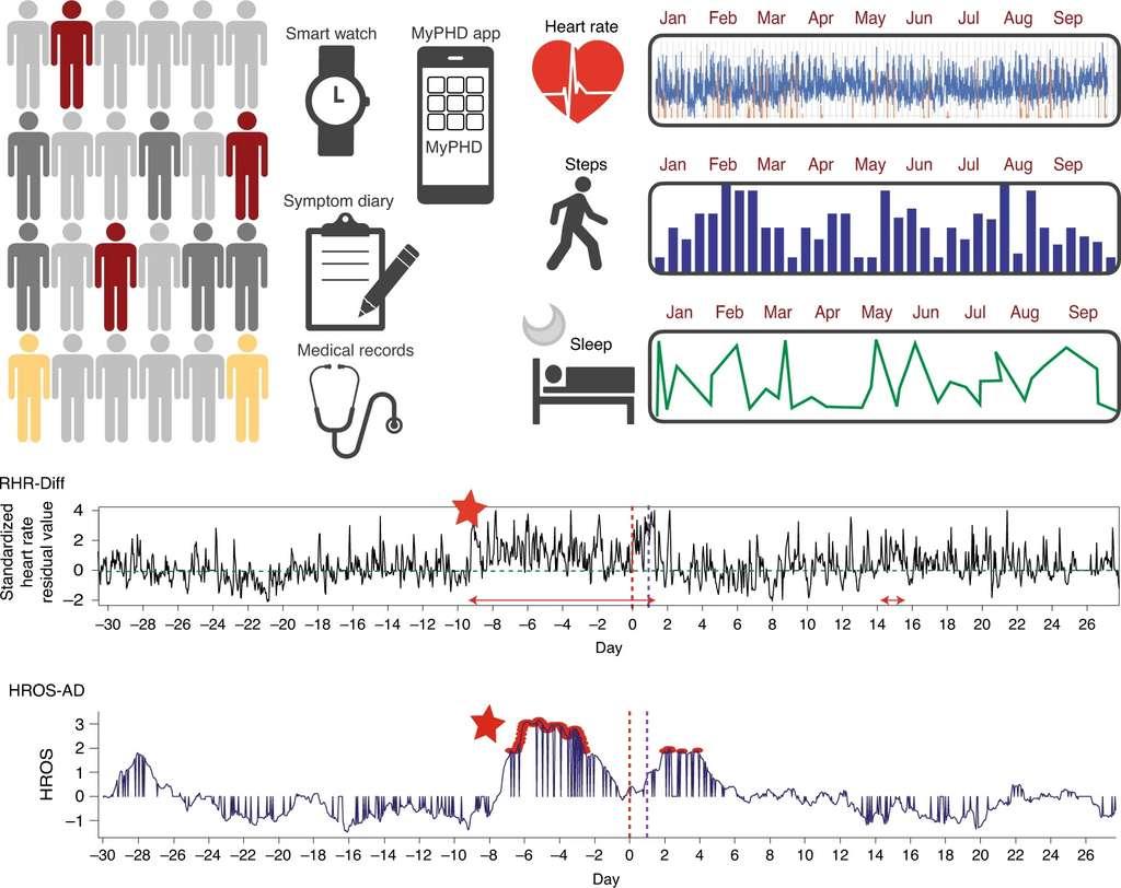 La fréquence cardiaque, le nombre de pas et le sommeil de plus de 5.000 participants ont été relevés sur une période de plusieurs mois. Deux algorithmes de détection des infections ont été développés (RHR-Diff et HROS-AD). Sur les graphiques en bas, les élévations anormales de la fréquence cardiaque détectées sont marquées par des étoiles rouges. Le jour de l'apparition des symptômes et le jour du diagnostic sont indiqués respectivement par des lignes verticales en pointillé rouge et violet. © Université de Stanford