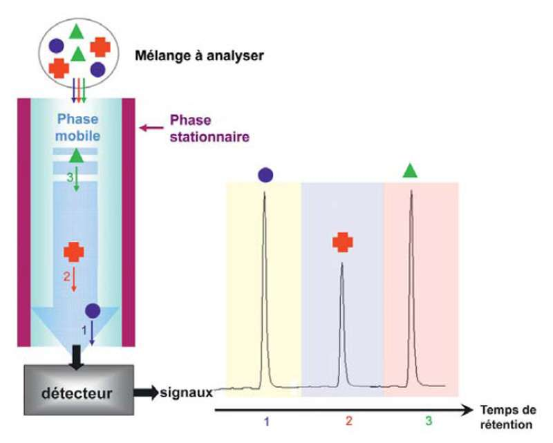 Entraînées par la phase mobile, les molécules migrent le long de la colonne de phase stationnaire et en sortent à une vitesse différente selon leurs propriétés : plus une molécule s'« accroche » à la colonne ou a peu d'affinité pour la phase mobile, plus elle tardera à sortir. À la fin de l'opération, toutes les molécules sont recueillies séparément et un détecteur donne des signaux caractéristiques que l'on peut analyser : le chromatogramme. Mikhail Semyonovich Tswett (1872-1919) a inventé la chromatographie. © DR