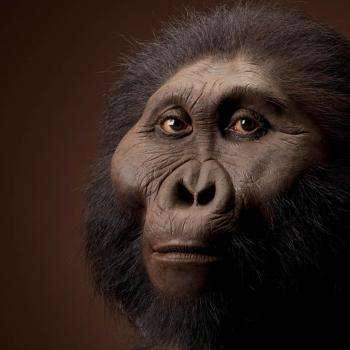 Vue d'artiste de Paranthropus boisei. © John Gurche, Smithsonian, National Museum of Natural History
