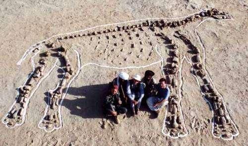 Le squelette est à nouveau reconstitué, sous son profil droit. © 2000 MPFB