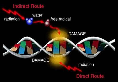 Dommages infligés à l'ADN par des rayonnements © UCAR University of Michigan