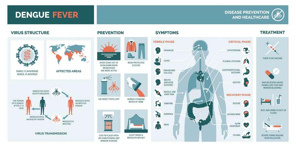 Fiche maladie de la dengue. © elenabsl, Adobe Stock