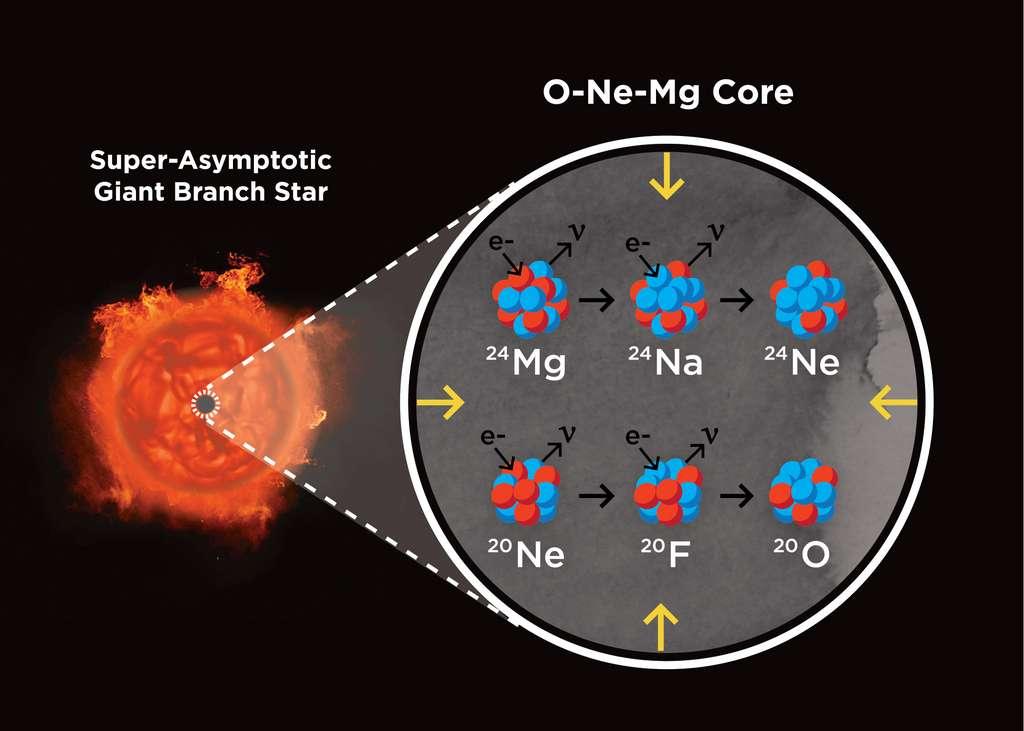Vue d'artiste d'une étoile sur la branche super-asymptotique des géantes (à gauche) et de son noyau (à droite) composé d'oxygène (O), de néon (Ne) et de magnésium (Mg). Un tel astre est l'état final des étoiles dans une gamme de masses comprises entre environ 8 à 10 masses solaires, dont le noyau est supporté par la pression d'un gaz d'électrons (e-). Lorsque le noyau devient suffisamment dense, le néon et le magnésium commencent à manger des électrons (ce qu'on appelle des réactions de capture d'électrons produisant neutrons et neutrinos ν), réduisant la pression et induisant une explosion de supernova par effondrement du noyau. © S. Wilkinson ; Observatoire de Las Cumbres
