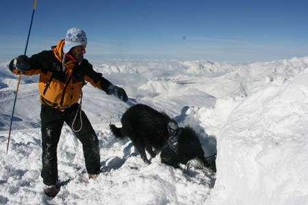 Chien de recherche de victimes d'avalanches lors d'un stage d'entraînement organisé par l'Anena. © Anena