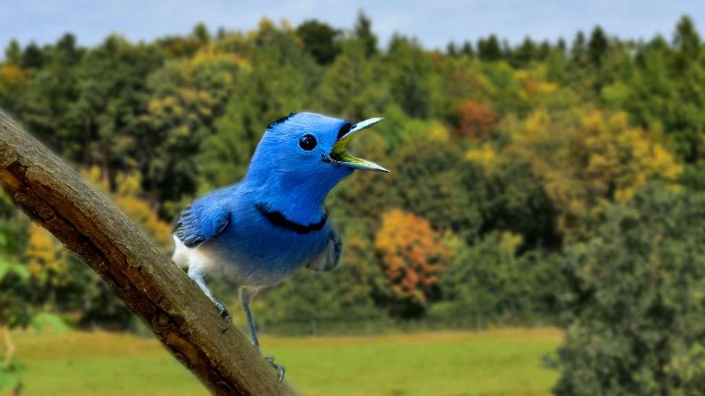 Un oiseau couleur d'azur