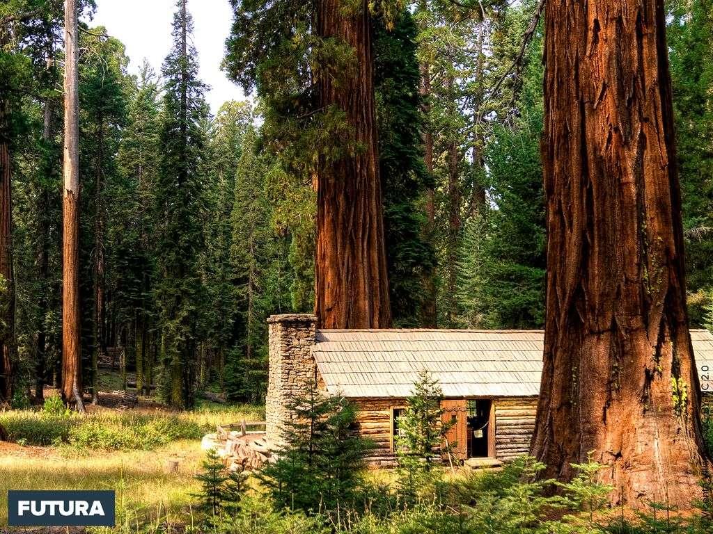 Cabane dans une forêt de séquoïa