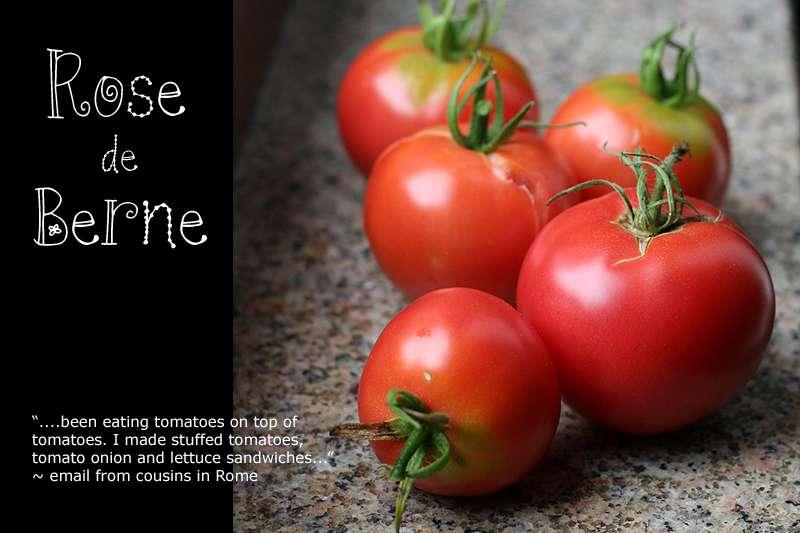 Ancienne variété française, la tomate Rose de Berne résiste bien aux maladies. © Rubber Slippers in Italy, Flickr, CC by-nc-nd 2.0