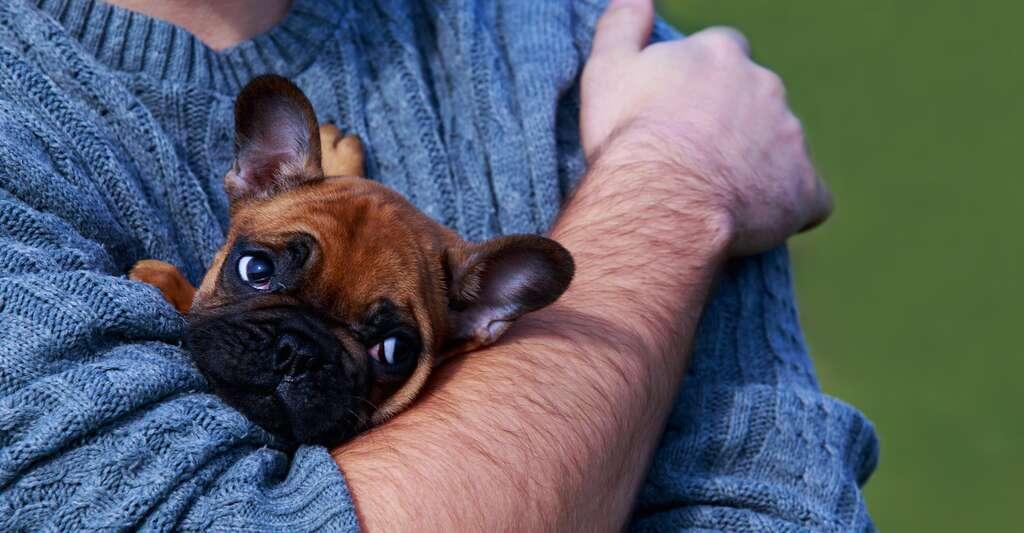 Rassurer son chien ne l'aide pas. Au contraire, cela a tendance à le conforter dans sa peur. Mieux vaut vous comporter comme si de rien n'était et vaquer à vos occupations afin que votre chien comprenne qu'il n'y a aucun risque. © deviddo, Fotolia