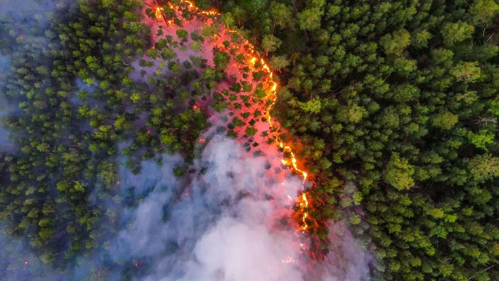 Les départs d'incendies sont causés par la foudre et les activités humaines. © Greenpeace