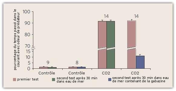 Les poissons-clowns préalablement exposés à un milieu riche en CO2 se dirigent préférentiellement vers un courant d'eau portant l'odeur de leur prédateur. Mais lorsqu'ils sont, dans un deuxième temps, exposés à un milieu contenant de la gabazine (en bleu), ils retrouvent en grande partie leur réaction normale d'évitement (le chiffre au-dessus des colonnes est le nombre de poissons testés). © Nilsson et al. 2012, Nature Climate Change - adaptation Futura-Sciences