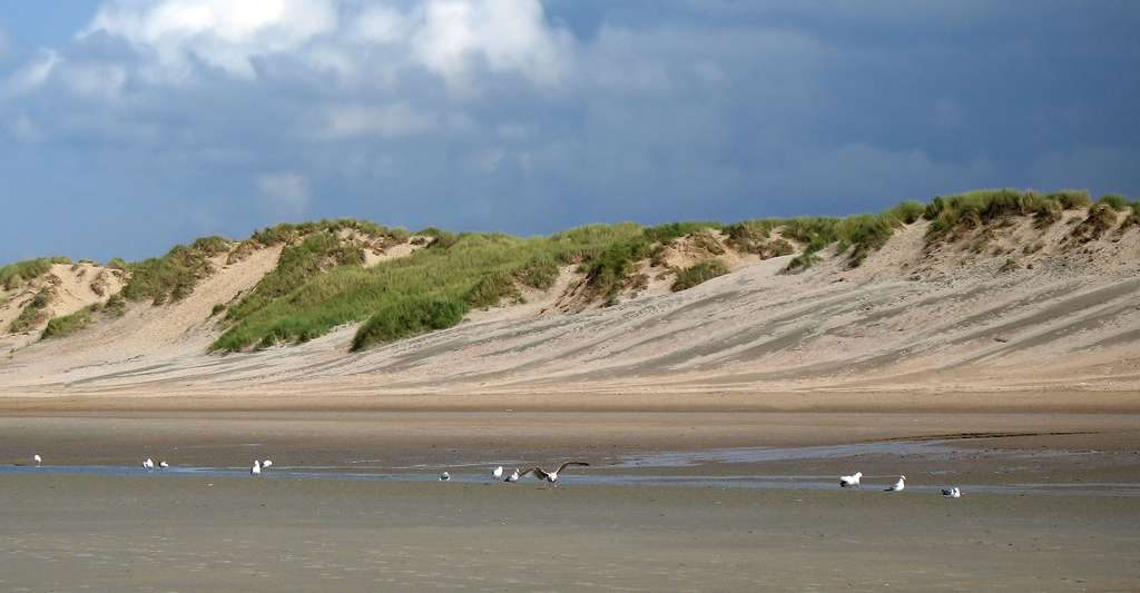 Les dunes de Koksijde (Province de Flandre Occidentale, Belgique). © Marc Ryckaert - CC BY 2.5