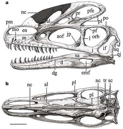 Représentations du crâne de Guanlong