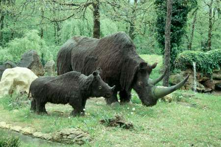 Rhinocéros laineux © Christian Lévêque