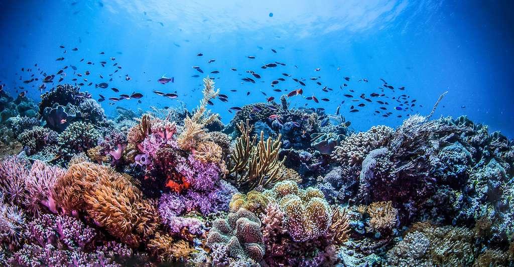 Fonds marin de l'île de Madagascar. © Iness Arna - Shutterstock