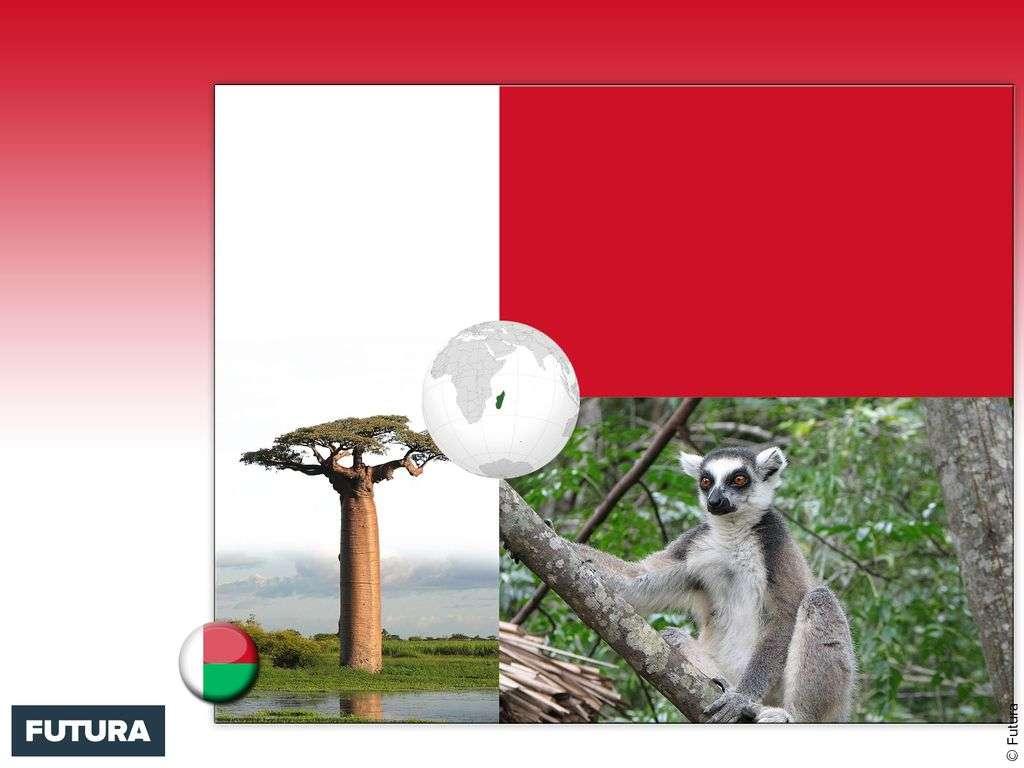 Drapeau : Madagascar