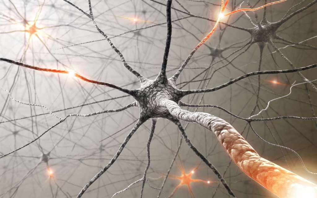 Des fonctions cérébrales cruciales ont été rétablies dans des cerveaux de porcs morts branchés à un système appelé BrainEx.© ktsimage / Istock.com