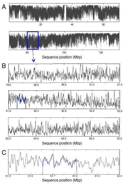 Visualisation, à plus ou moins grande échelle (agrandissement de A à C), des différences d'intensité de fluorescence en fonction du positionnement sur le chromosome 12 humain. A. Profile de fusion du chromosome entier. B. Profile de fusion de la position 79.500.000 à la position 85.500.000. C. Agrandissement du profile de fusion de 500 kilopaires de bases. La courbe bleue superposée correspond à une partie de chromosome 12 clonée. © Université de Lund / PNAS