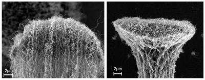 Détail de l'extrémité d'un faisceau de nanotubes avant (à gauche) et après densification (à droite). Crédit : Rensselaer/Liu