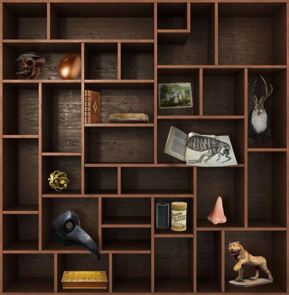 Et de douze ! Rendez-vous dans deux semaines pour un nouveau chapitre du Cabinet de curiosités. © nosorogua, Adobe Stock, Futura