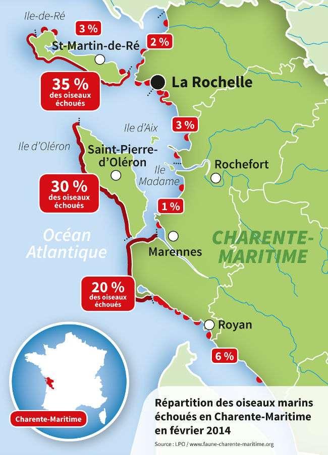 Cette carte montre la répartition des oiseaux marins échoués en Charente-Maritime en février 2014. Les macareux moines payent le plus lourd tribut. © LPO